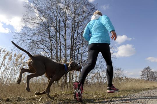 Nainen lenkkeilee weimarinseisojan kanssa aurinkoisessa säässä.